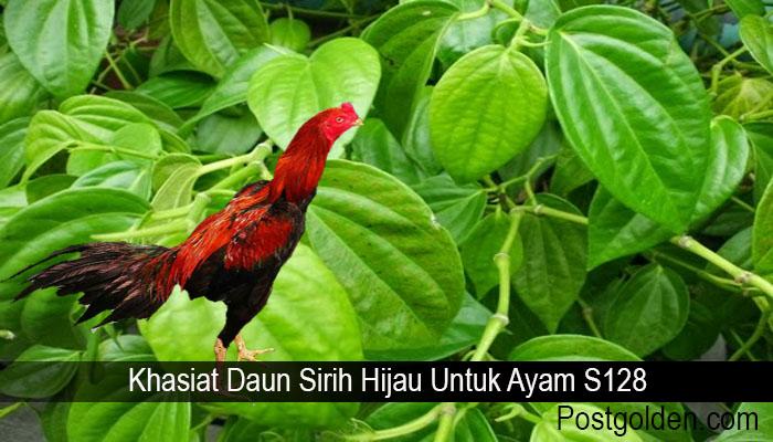 Khasiat Daun Sirih Hijau Untuk Ayam S128