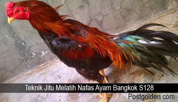 Teknik Jitu Melatih Nafas Ayam Bangkok S128
